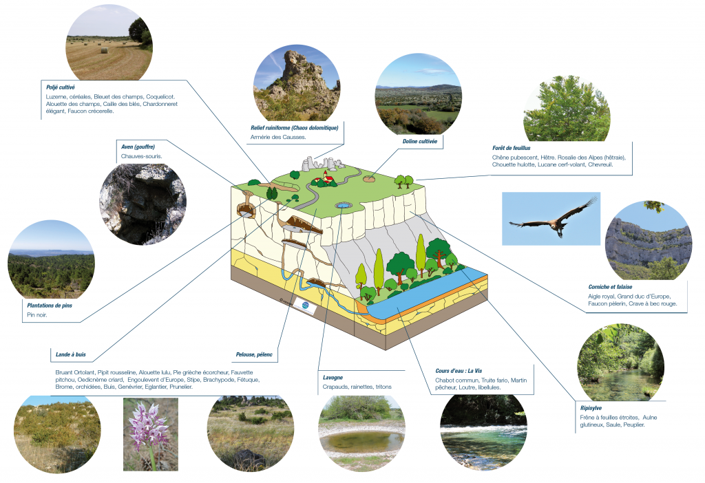 schema-biodiversite