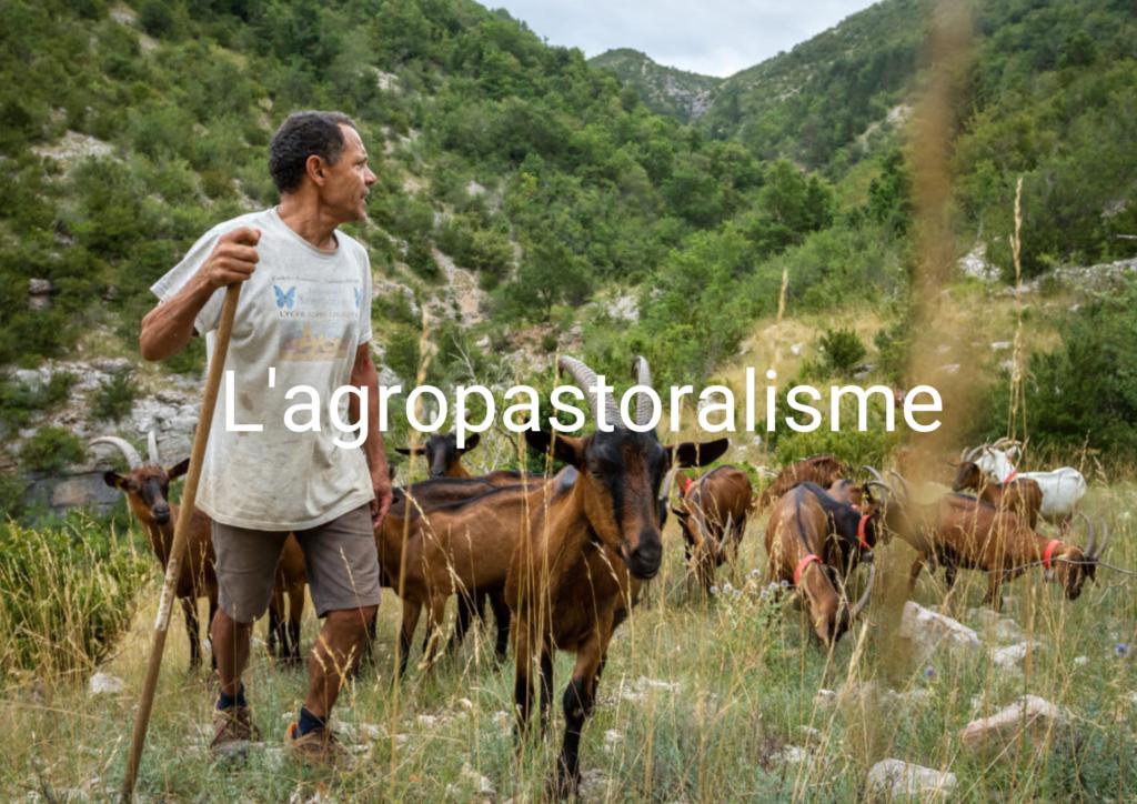agropastoralisme